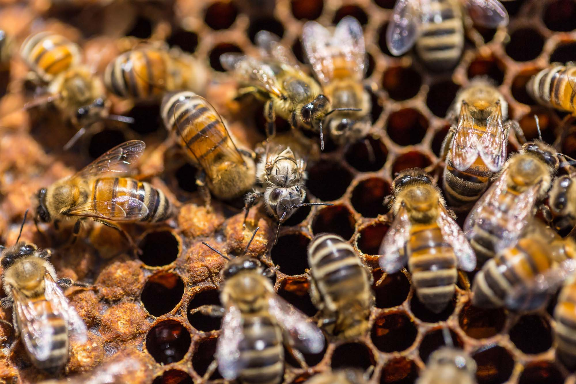 bees wax, cirebelle, sustainability, business model
